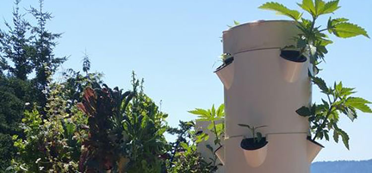 aeroponics and cannabis cultivation with tower garden ganjapreneur - Tower Garden